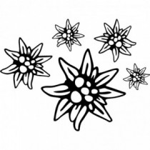 Aufkleber Edelweiss V2